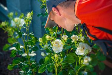 Gardener Smelling Roses