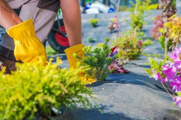 Gardener Spring Planting