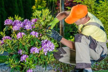 Gardener Taking Care of Flowers