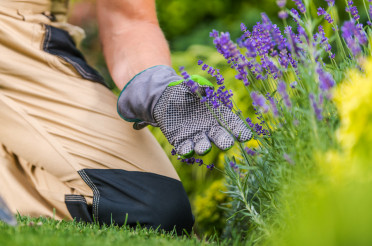 Gardener Taking Care of His Flowers in a Garden