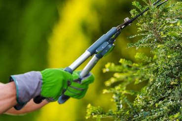 Gardener Trimming Decorative Garden Tree Branches