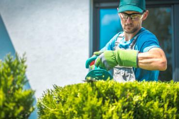 Gardener Trimming Shrub
