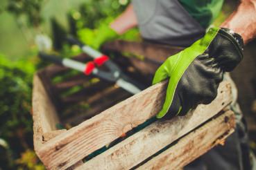 Gardener with Wooden Crate