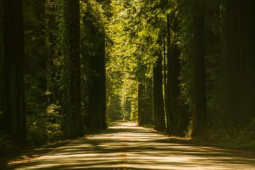 Giant Redwood Trees Road