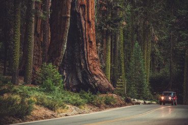 Giant Sequoia Generals Highway