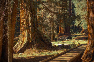 Giant Sequoias Trailheads