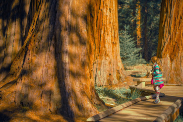Girl in the Sequoia Forest