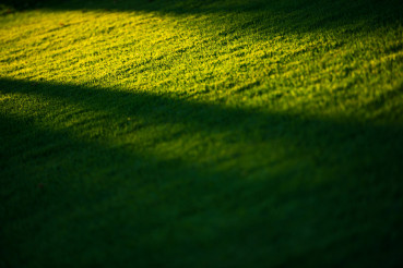 Grass Field and the Sunlight