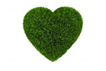 Grassy Heart Isolated