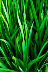 Grassy Leaves