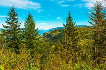 Green Oregon Landscape
