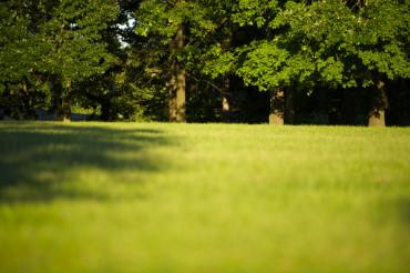 Green Park Field