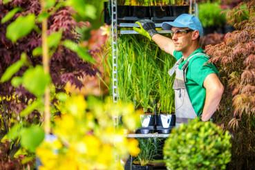 Greenhouse Gardening Concept