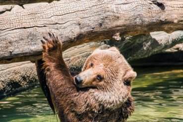 Grizzly Water Fun