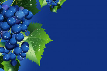 Graphic Concept Of Bunch Of Blue Grapes.