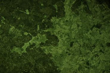 Grunge Floral Green