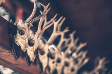 Hanging Hunting Trophies