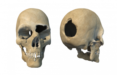Head Shot Damaged Skulls