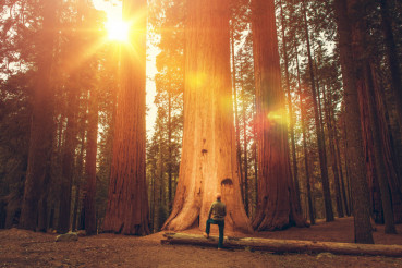 Hiker in Front of Giant Sequoia