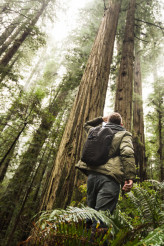 Hiker in the Redwood