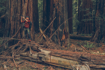 Hiker in the Redwoods Taking Pictures Using His Smartphone