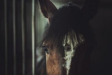 Horse Cruelty Theme