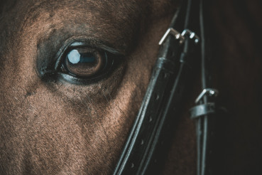 Horse Eye Closeup Photo