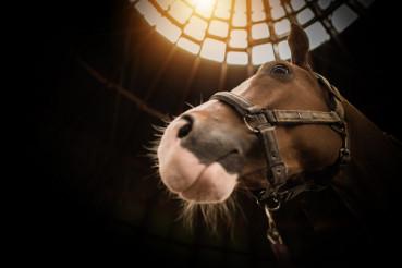Horse in the Barn Closeup