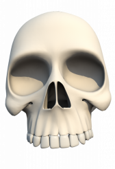 Human Skull PNG Front
