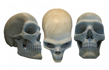 Human Skulls Illustration PNG
