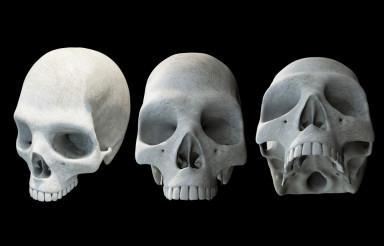 Human Skulls on Black