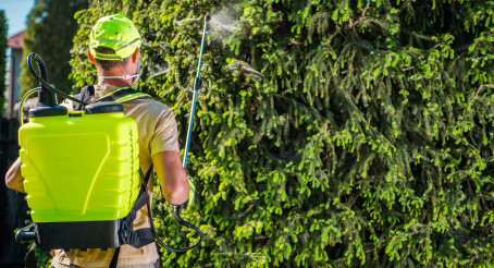 Caucasian Male Worker Spraying  Insecticide On Pine Tree.