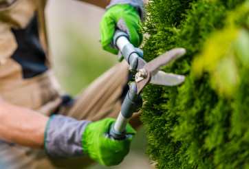 Landscaping and Gardening Worker with Scissors in His Hands