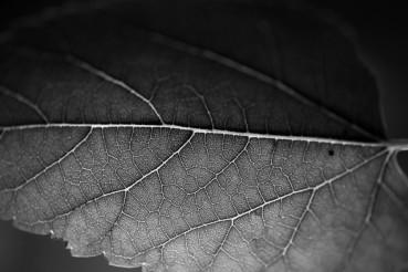 Leaf in Macro