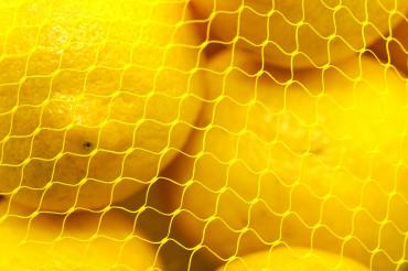 Lemons Pack