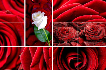Lovely Roses Mosaic