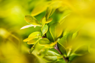 Macro Photo of Green Garden Plant Leaves