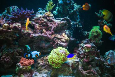 Marine Aquarium Reef