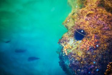 Mediterranean Sea Life