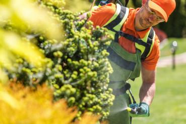 Men Fertilizing Inside Garden