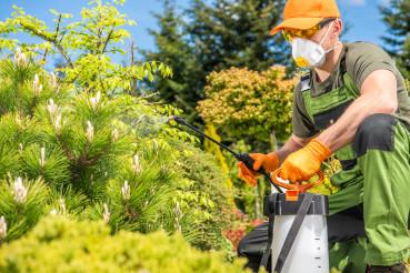 Men Fungicide His Backyard Garden Plants