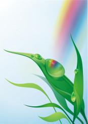 Morning Dew illustration