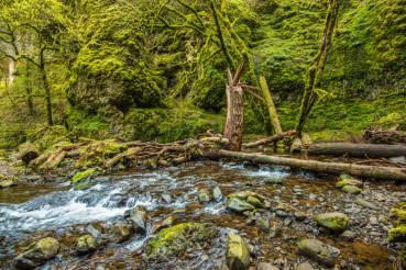 Mossy Oregon Creek