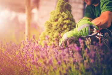 My Beautiful Summer Garden