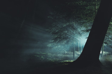 Mysterious Intense Light Inside Dark Foggy Forest