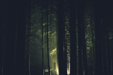 Mystery Dark Forest Light