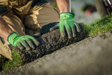 Natural Grass Turf Installer