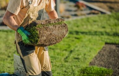 Installation Of Natural Grass Turf Rolls.