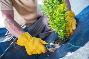 New Garden Trees Planting