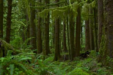 Nortwest US Rainforest